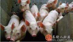 7月生猪存栏、能繁母猪存栏齐降,为何猪价仍难大涨?