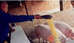 母猪高淘汰、高销量状态在10月结束,是否影响供需和猪价?