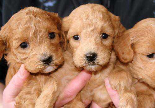 三只小乳狗