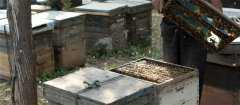 蜜蜂如何养殖