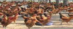 农村养鸡场环保标准