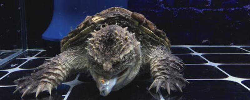 乌龟蛋怎样孵出小乌龟_乌龟蛋怎样孵出小乌龟