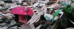 红菇怎么保存