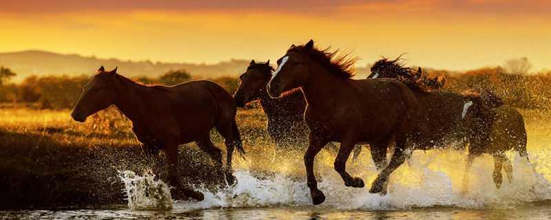 马是哺乳动物吗