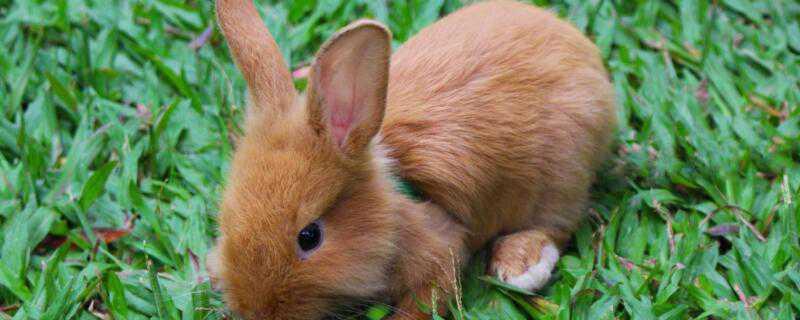小兔子怎么过冬的