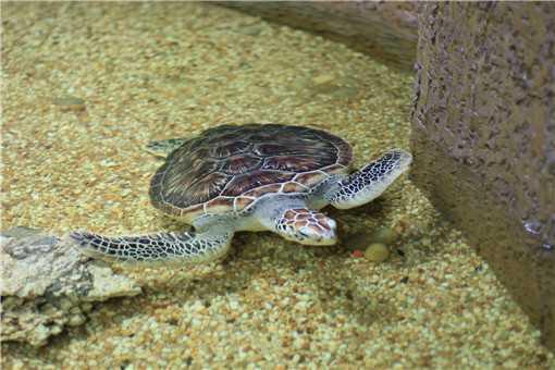 乌龟病害防治方法