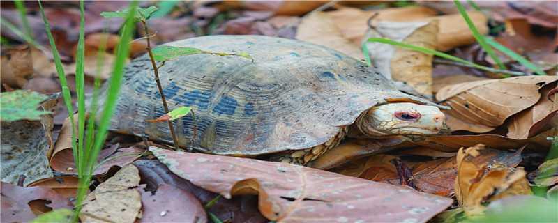 爬行中的乌龟