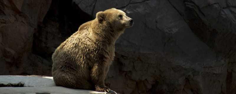 熊怎么过冬?