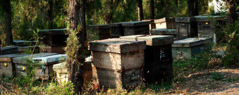 蜂箱生虫怎么办