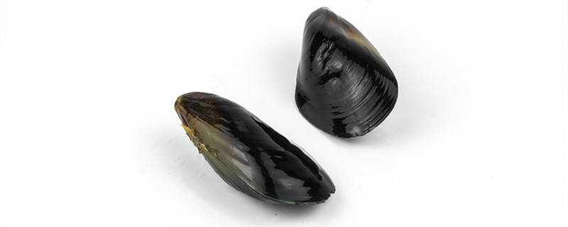淡菜是什么菜是牡蛎吗
