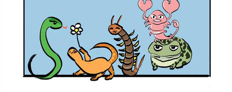 蜈蚣是怎么繁殖的