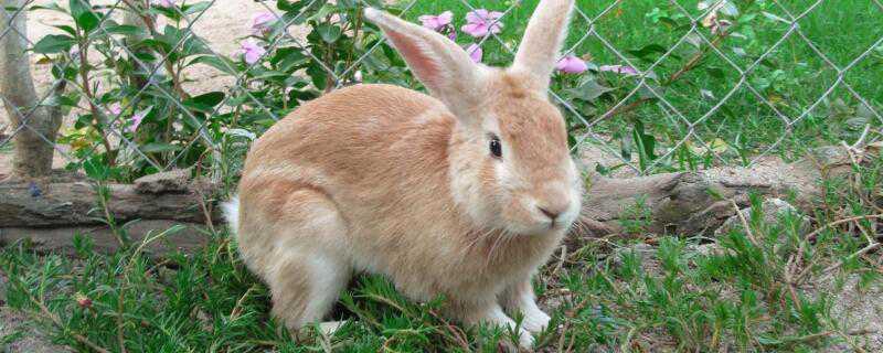 兔子怎么过冬
