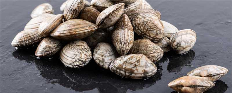 贝壳类怎么繁殖
