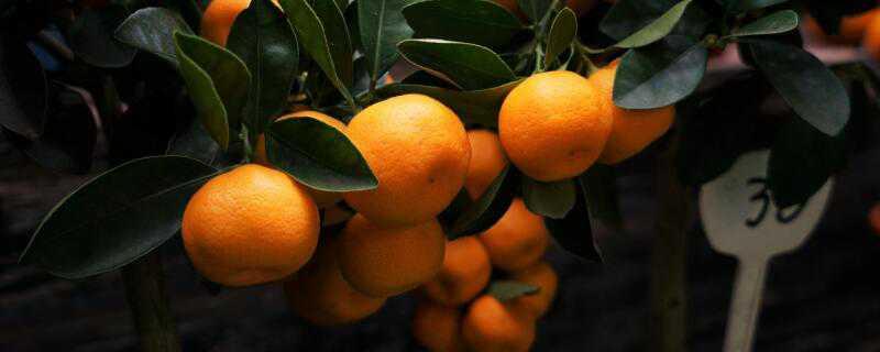 秋季可以种什么水果