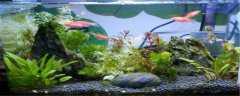 红斑马鱼怎么繁殖