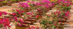 种植花的方法和注意事项
