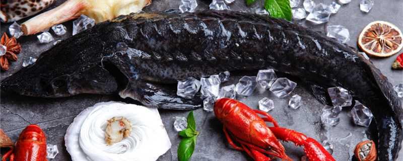 鲟鱼是淡水鱼还是海鱼?