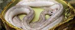 蛇怎么过冬天?