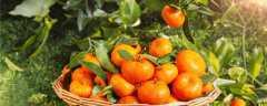 十月适合种什么水果?