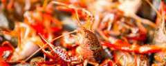 龙虾冬天怎么过冬?