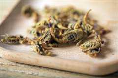 2019年蝎子多少钱一斤?它的养殖前景和利润如何?