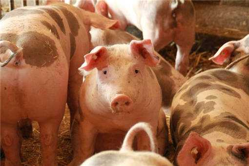 2020年养猪贷款的手续有哪些