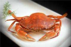 黄油蟹市场多少钱一只?它是怎样形成的?功效和作用有哪些?