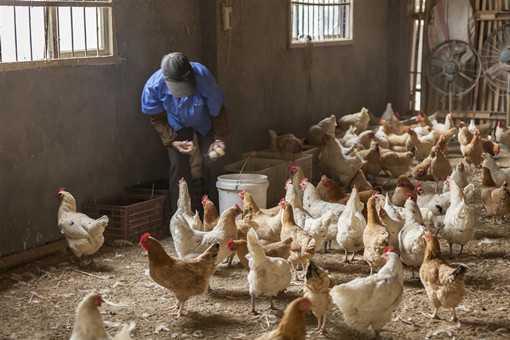 2020年养殖创业需要哪些手续和证件