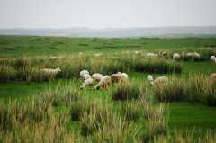 想养羊的话怎样审批养殖场?常见的养羊模式有哪些?