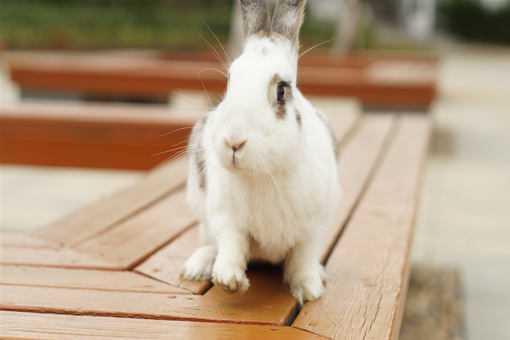 兔子还能养吗