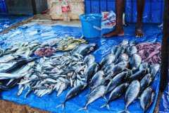 水产品或被新冠病毒污染而非感染是怎么回事?病毒污染食物的特点