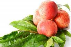 正宗血桃树苗多少钱一棵?哪个品种好?