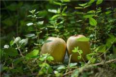 猕猴桃的功效与作用是什么?不能和什么一起吃?