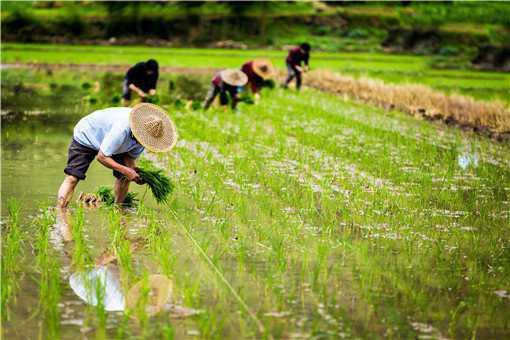 2020年农业重点补贴对象是哪些人群