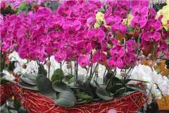 适合室内养殖的花卉盆栽有哪些?这十种养眼又好养!