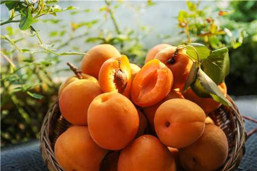 黄桃的种植与管理技术是什么