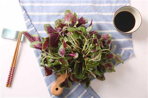 苋菜的种植方法和时间