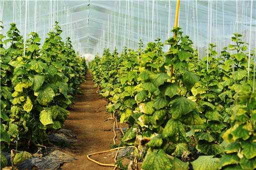蔬菜大棚种植