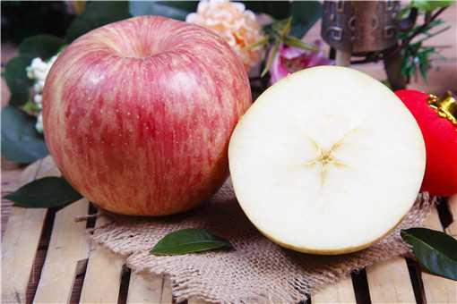 种植苹果如何管理