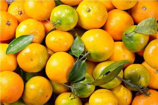 柑桔种植技术有哪些