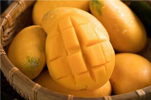 种芒果有哪些注意事项
