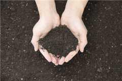 复合肥是什么肥料?怎么使用才是正确的方法?