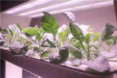 无土蔬菜种植技术要点有哪些?无土栽培的好处是什么?