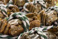 大闸蟹蒸多久最好?蒸熟了隔一夜可以吃吗?