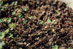 有机肥发酵剂的使用方法是什么?有哪些注意事项?
