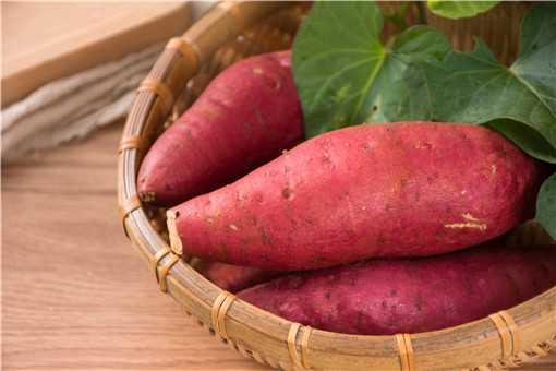 红薯发芽了还能吃吗