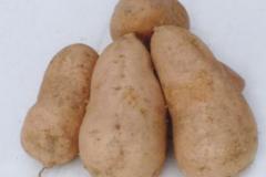 甜薯怎么做好吃,甜薯的食用方法
