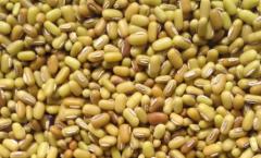 竹豆怎么吃比较好,竹豆的食用方法