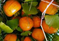 野柿子的功效与作用,野柿子怎么吃好