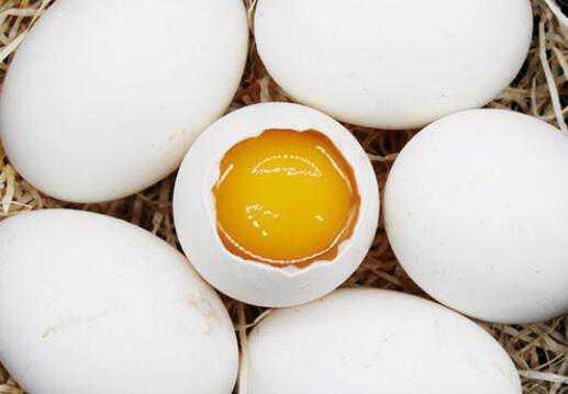 鹅蛋不能和什么一起吃
